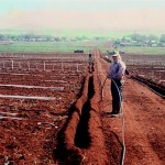 Drip irrigation installation with plastic ground cover for moisture preservation and weed control on Molokai , Hawaii.